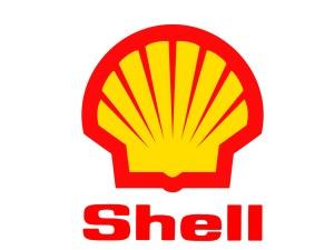 shell-300x225